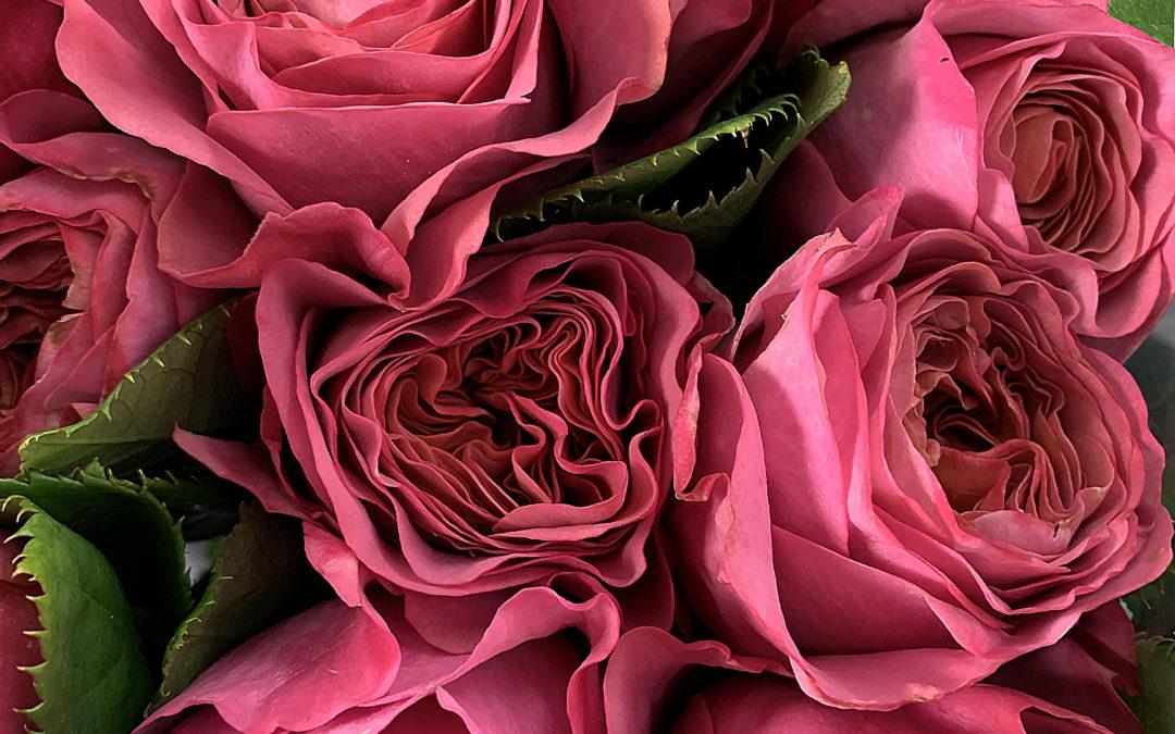 Flower Update — 21 April 2020